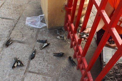 Chim chết cho nhốt quá lâu và quá nhiều trong lồng (Ảnh: internet)